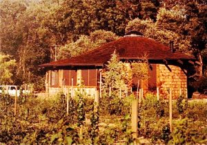 Yurt in Vineyard